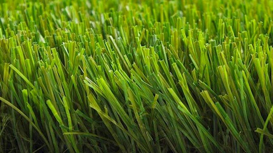 royal-grass